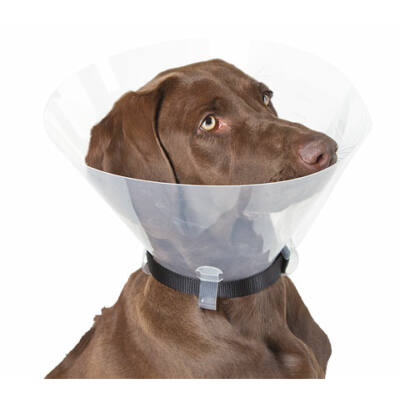 műtéti gallér kutyáknak